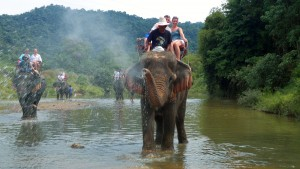Fun in the water with your elephant